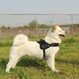 Dog Adjustable Control Soft Vest Harness Walk Collar Chest Strap Vest - Black M